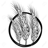 14460810-doodle-style-sheaf-of-wheat-illustration-in-vector-format